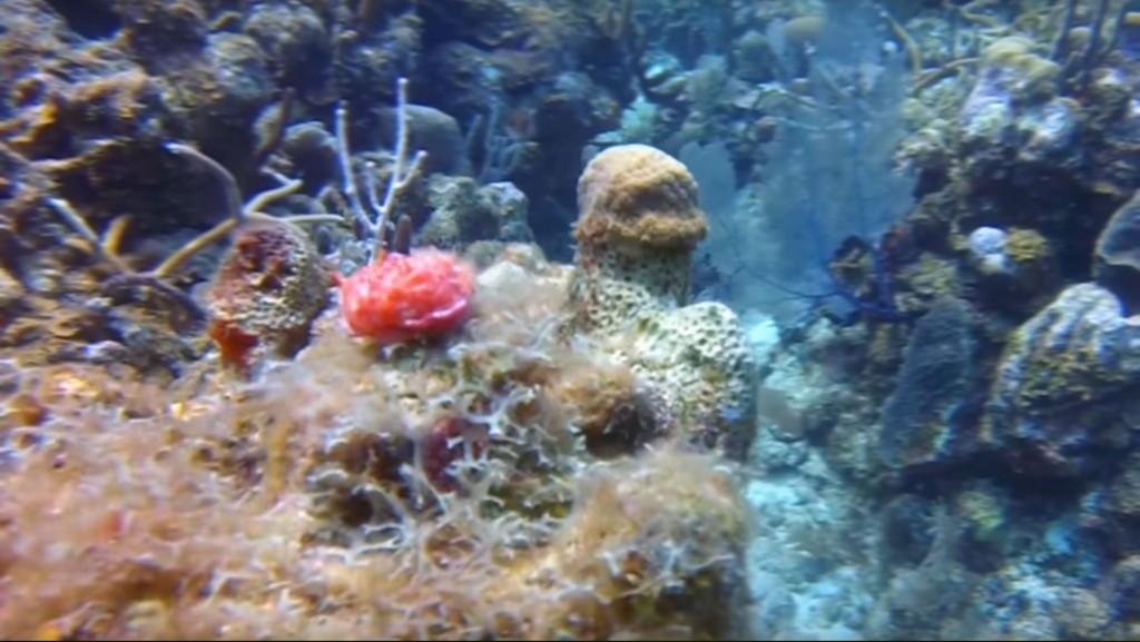 red sea slug nudebranch