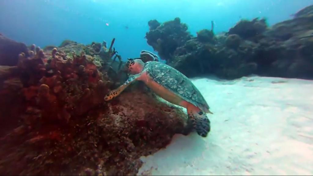 hangry turtle