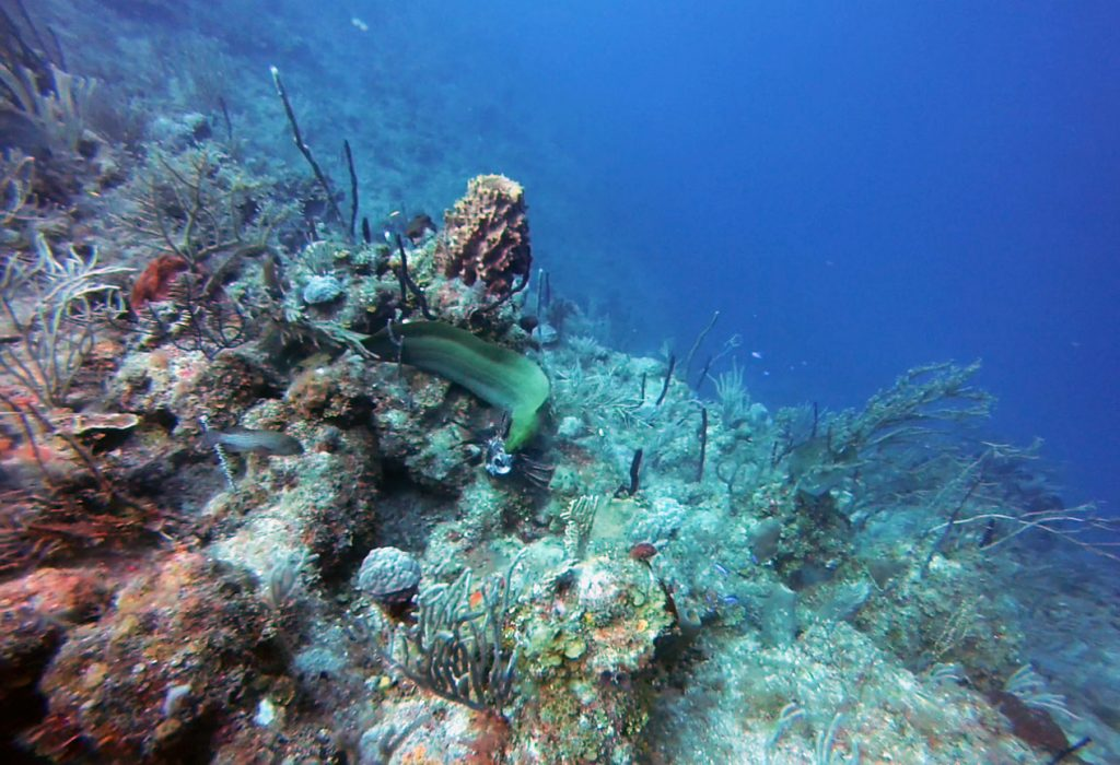 Moray Eel vs Lionfish over Coral Reef