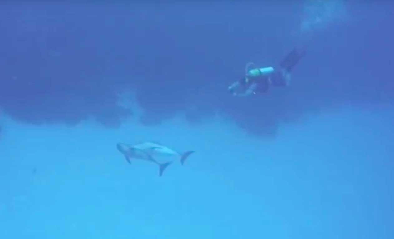 scuba diving with wild dolphins