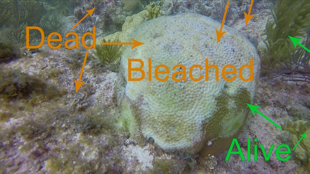 Dead vs. Alive Coral