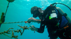Coral Restoration Expedition