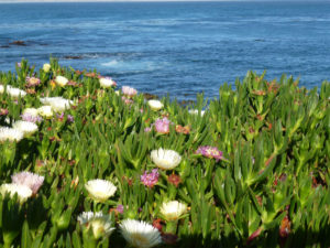 Monterey Bay Flowers