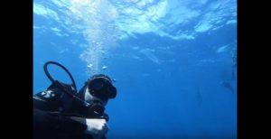 Shooting video of a scuba diver with a wide angle lens.