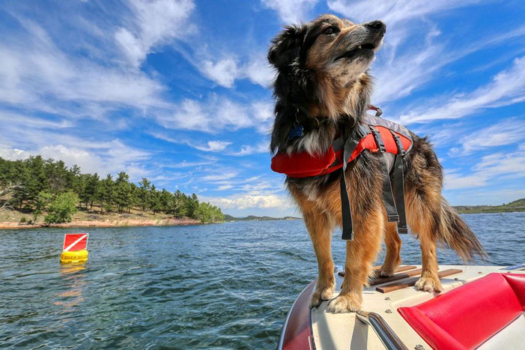 Dive flag, buoy, boat, dog